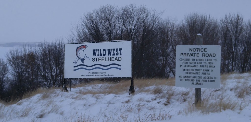 Wild West Steelhead | point of interest | Canaan No. 225, SK S0H 3P0, Canada | 3068582208 OR +1 306-858-2208