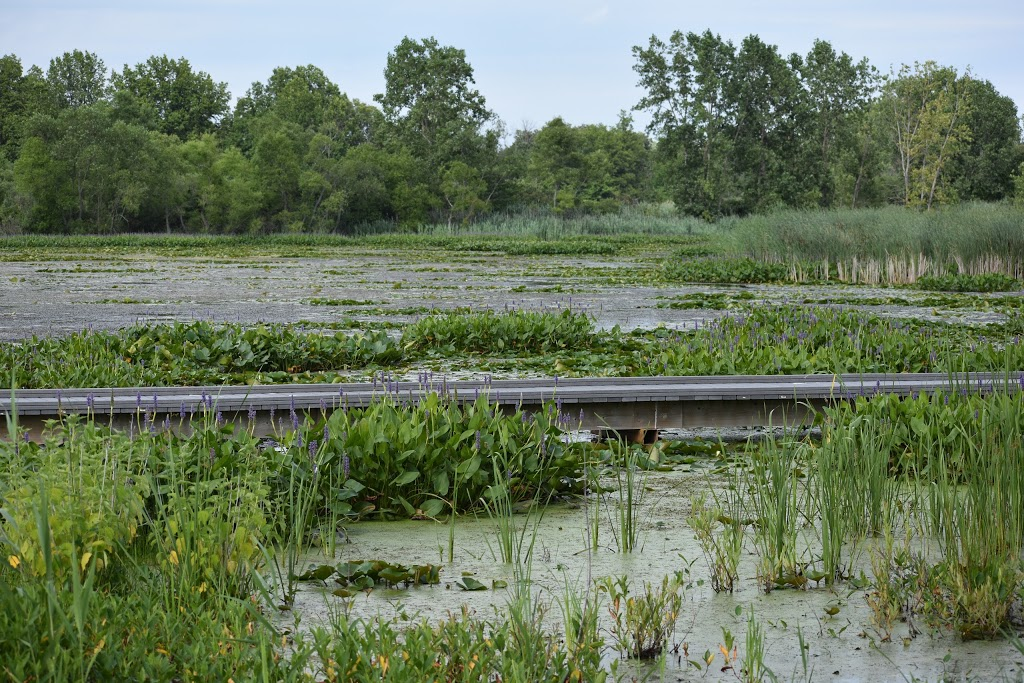 Hillman Marsh Conservation Area | park | 1826 Mersea Rd 2, Leamington, ON N8H 3V7, Canada | 5197765209 OR +1 519-776-5209