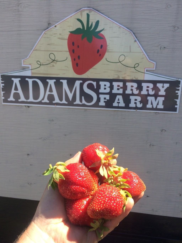 Adams Berry Farm   store   25761 Hwy 41, Griffith, ON K0J 2R0, Canada   6138011219 OR +1 613-801-1219