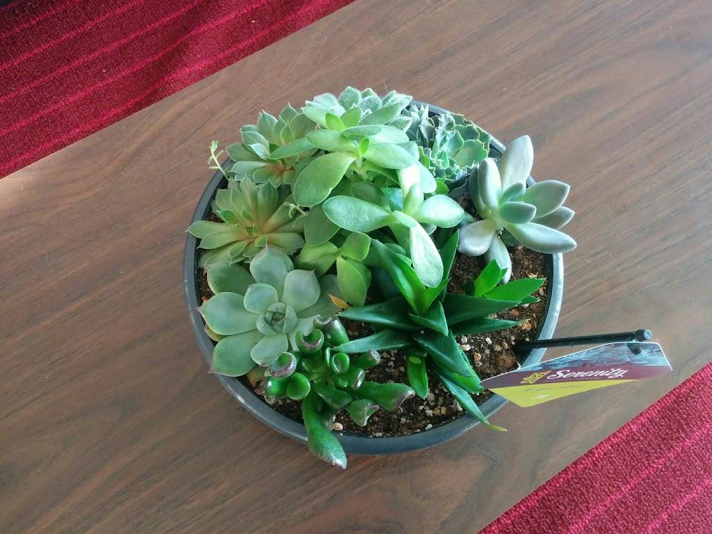 Sobeys Flower Shop | florist | 274 Highland Rd W, Kitchener, ON N2M 3C5, Canada | 5197443255 OR +1 519-744-3255
