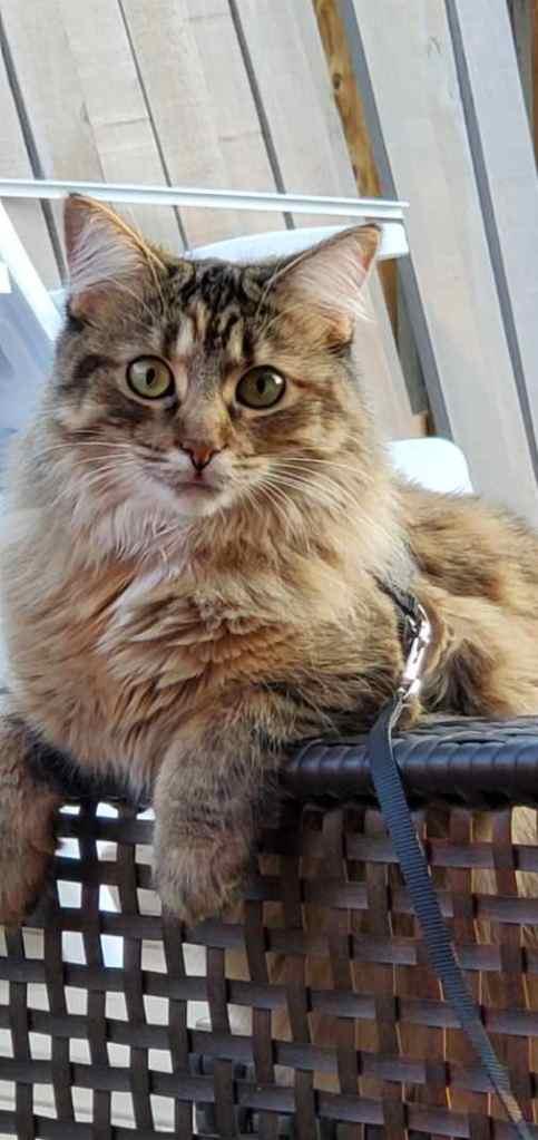 Sudbury Regional Cat Hospital | veterinary care | 262 Caswell Dr, Sudbury, ON P3E 2N8, Canada | 7055860414 OR +1 705-586-0414