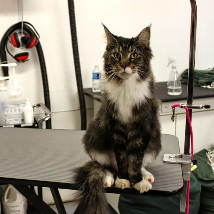 PreZoomably Cats | pet store | 1180 Winnipeg Street, Unit B, Regina, SK S4R 1J6, Canada | 3065339155 OR +1 306-533-9155