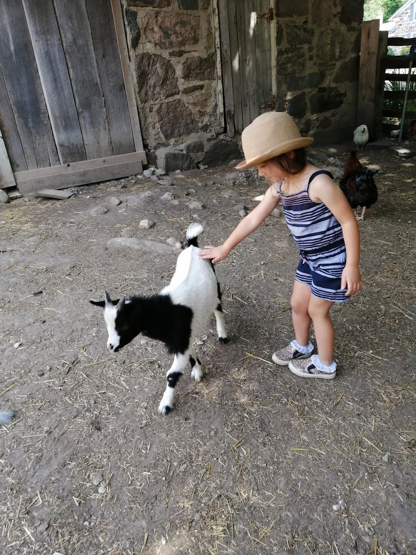 Seiling Family Farm | point of interest | 887573 Township Rd. 11 R.R.#3 Bright, Blandford-Blenheim, ON N0J 1B0, Canada | 2268085091 OR +1 226-808-5091