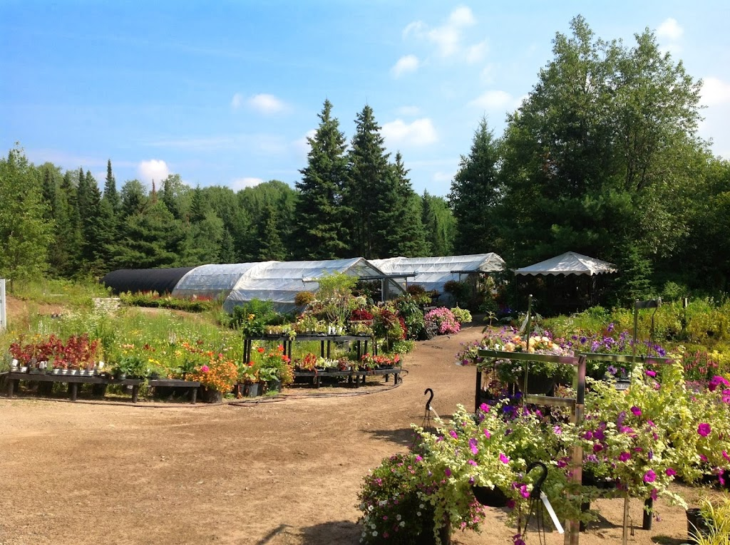 The Variegated Devas Nursery | store | #1027 Hwy # 11 DO NOT TAKE RATTRAY ROAD -#1027 Driveway exits directly from Hwy#11, Emsdale, ON P0A 1J0, Canada | 7057875812 OR +1 705-787-5812
