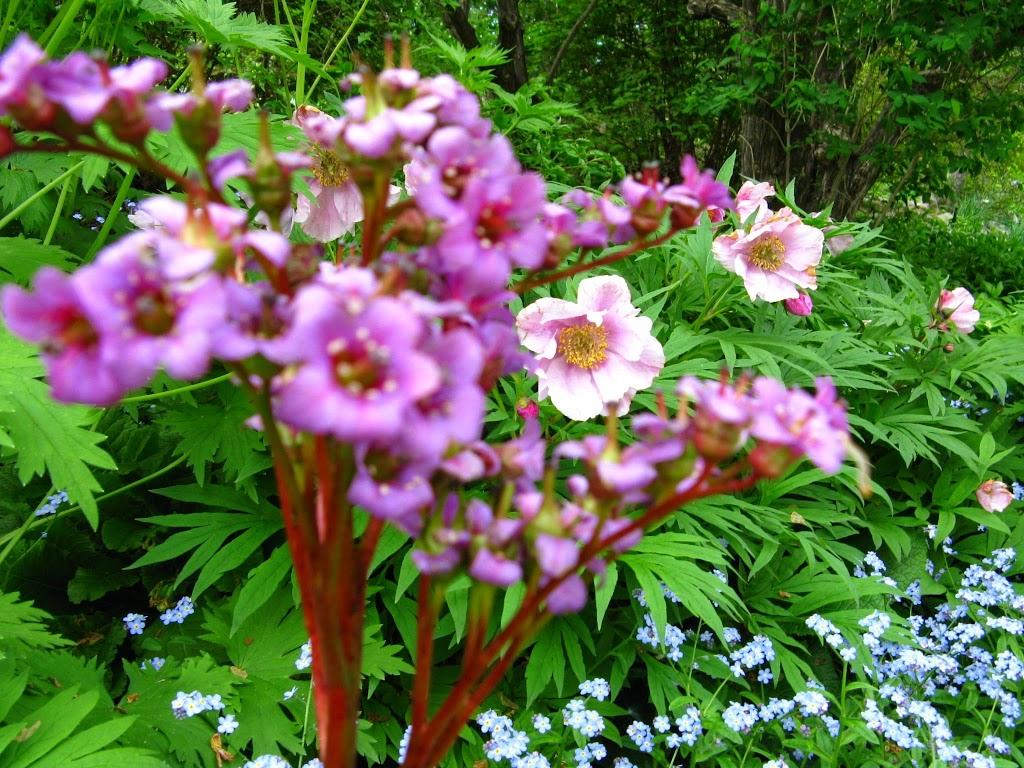 Reader Rock Garden | park | Southwest Calgary, Calgary, AB T2G, Canada | 4032682489 OR +1 403-268-2489