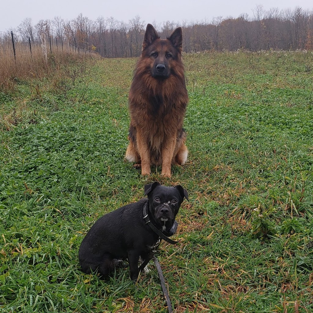 Waterdogs K9 Center | point of interest | 44 George St, Barrie, ON L4N 2G5, Canada | 7055037877 OR +1 705-503-7877