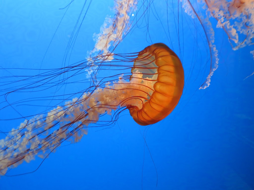 Blue World Aquariums   pet store   1393 Hillside Ave, Victoria, BC V8T 2B3, Canada   2504802897 OR +1 250-480-2897