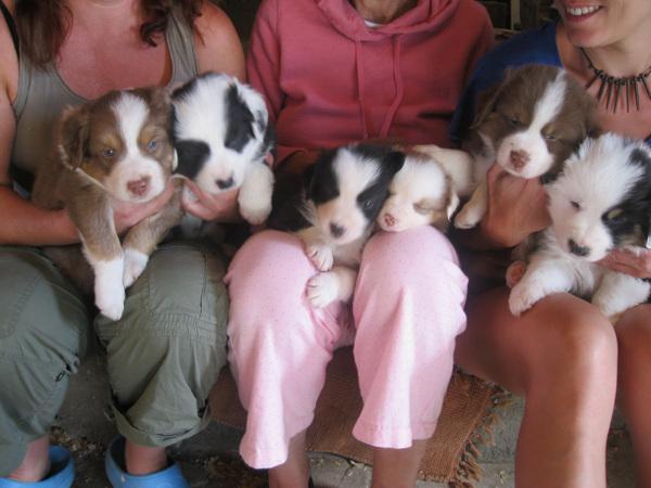 École Canine Professionnelle Tout-Tout | point of interest | 545 Rang 11, Bonsecours, QC J0E 1H0, Canada | 5143787776 OR +1 514-378-7776