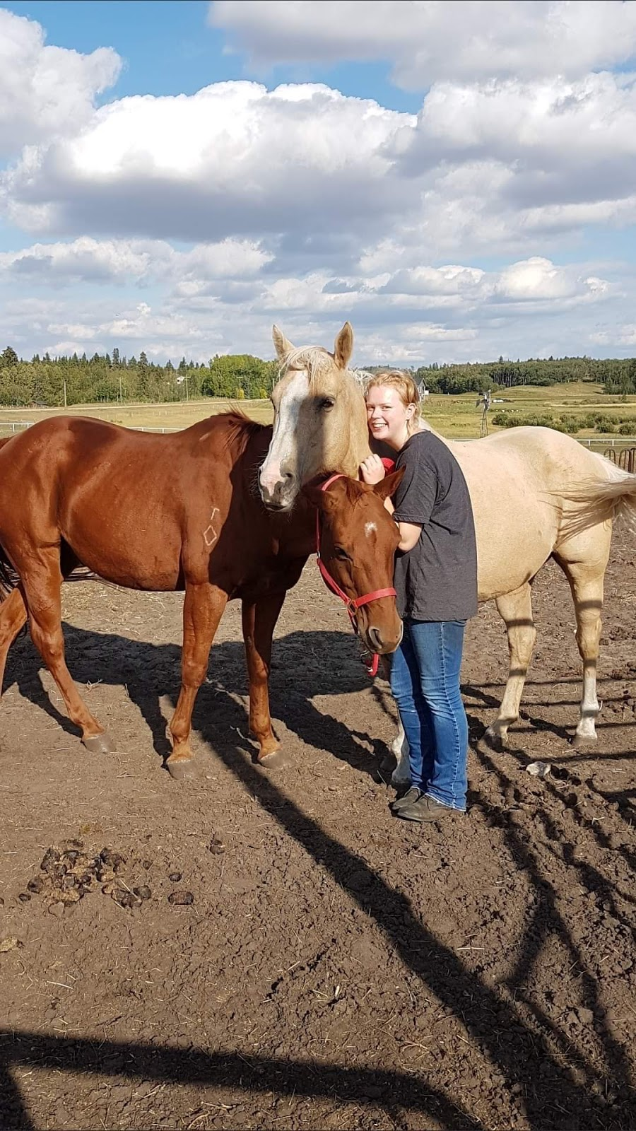 INSIGHT THROUGH HORSES   point of interest   41129, Range Rd 263, Lacombe, AB T4L 2N5, Canada   4033049852 OR +1 403-304-9852