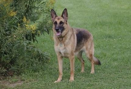 Clinique Vétérinaire Farnham Bedford   veterinary care   1555 Chemin des Coteaux CP 12, Farnham, QC J2N 2R4, Canada   4502935524 OR +1 450-293-5524