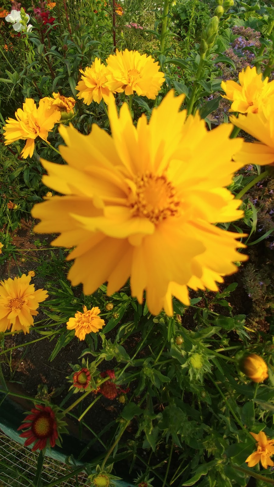 Dunsmuir Community Garden | park | 3C7, 12345 Sullivan St, Surrey, BC V4A 3B7, Canada