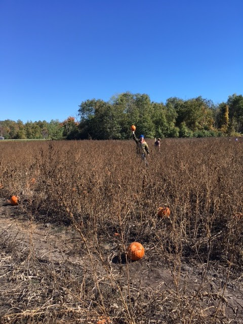 Parkinson's U pick Pumpkin patch | park | 5380-, 5678 Wellington County Rd 29, Guelph, ON N1H 6J1, Canada