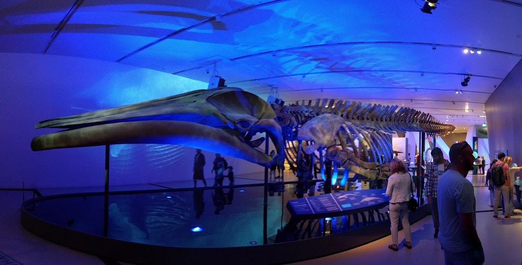 Royal Ontario Museum | museum | 100 Queens Park, Toronto, ON M5S 2C6, Canada | 4165868000 OR +1 416-586-8000
