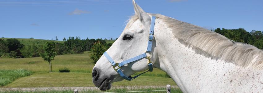 Greenhawk Equestrian Sport - McLaughlin - Clothing store