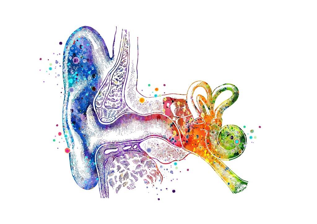 Hear Inc.   doctor   7819 E Saanich Rd Unit F, Saanichton, BC V8M 2B4, Canada   7783511145 OR +1 778-351-1145