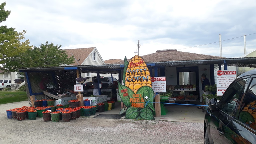 Carls Plants & Produce | store | 373 Seacliff Dr W, Leamington, ON N8H 4C9, Canada | 5193262817 OR +1 519-326-2817