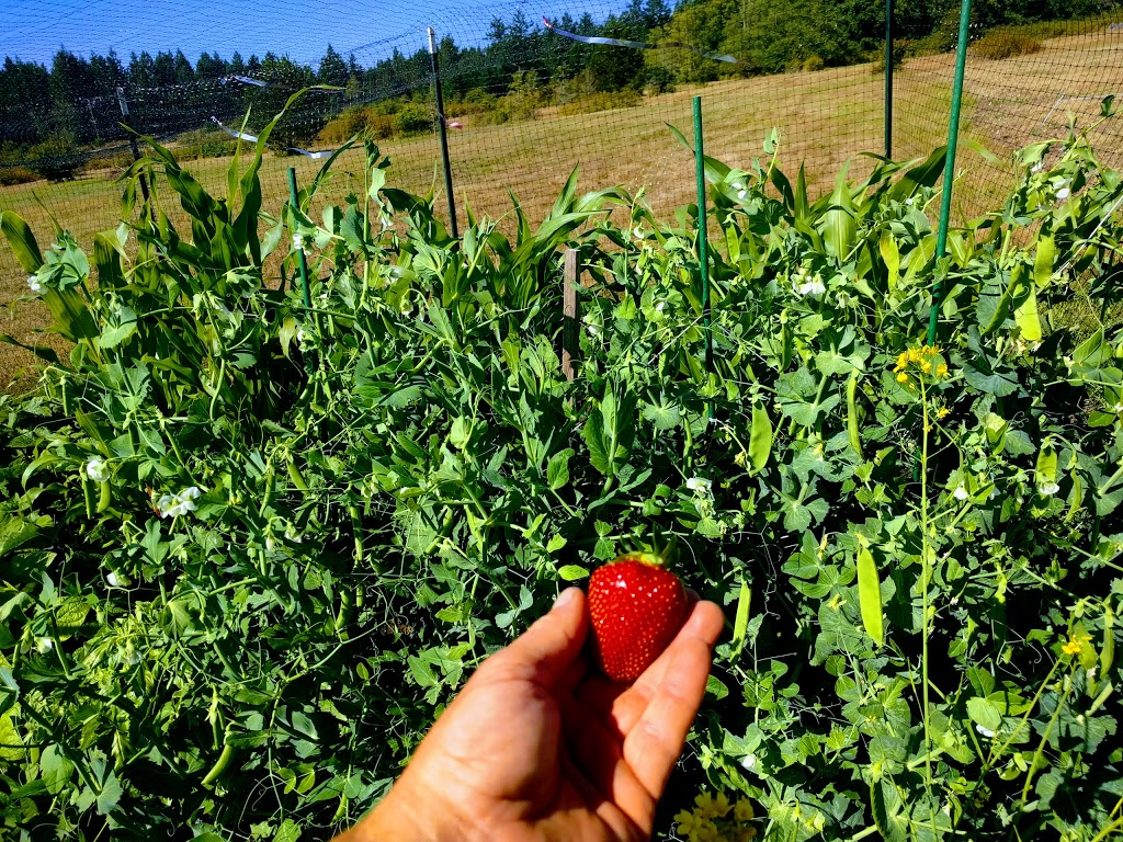 Pear Point Farm | store | 3166 Pear Point Rd, Friday Harbor, WA 98250, USA | 3602984840 OR +1 360-298-4840