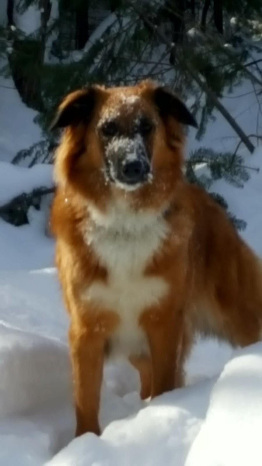 Adventure Dog Walks | point of interest | 35 Shadwick Dr, Etobicoke, ON M9R 2V6, Canada | 4162689278 OR +1 416-268-9278