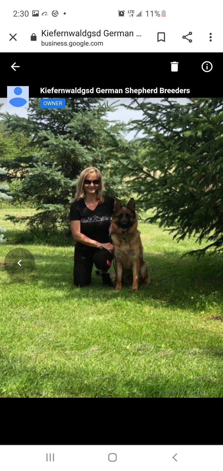Kiefernwaldgsd German Shepherd Breeders   point of interest   15539 The Gore Rd, Caledon, ON L7E 0X3, Canada   6479992401 OR +1 647-999-2401