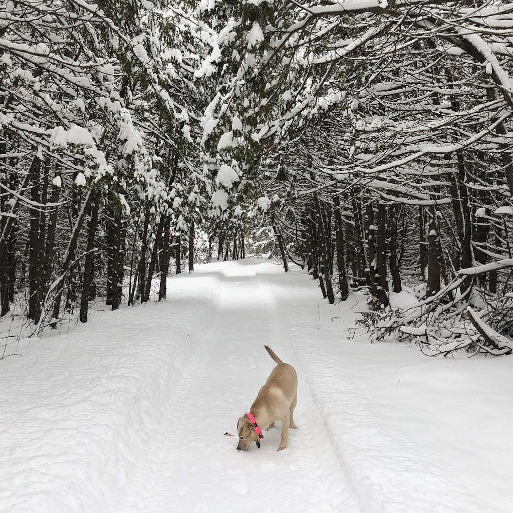 Barkwood Forest | park | 7635 Fernbank Rd, Stittsville, ON K2S 1B6, Canada | 6138500553 OR +1 613-850-0553