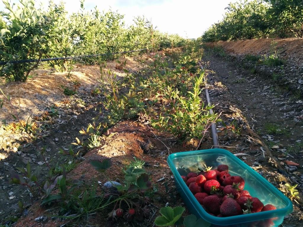 Birak Berry Farm | store | 3600 No 6 Rd, Richmond, BC V6V 1P5, Canada | 6047813795 OR +1 604-781-3795