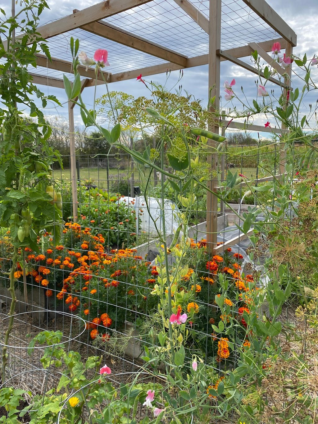 Concession Road Garden   point of interest   224 Concession 13 Walpole, Hagersville, ON N0A 1H0, Canada   9059066883 OR +1 905-906-6883