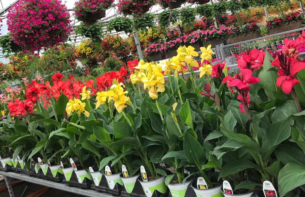 Egos Nurseries, Egos Garden Centre, Egos Farm Market | store | 596 Horseshoe Valley Rd E, Coldwater, ON L0K 1E0, Canada | 7053269922 OR +1 705-326-9922